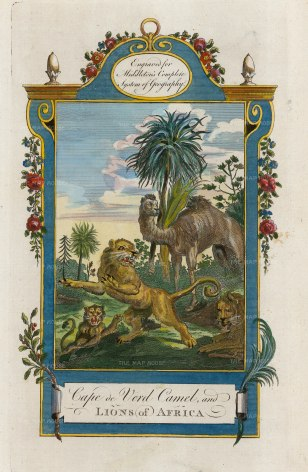 Middleton: Wild African Animals. 1778. A hand-coloured original copper-engraving. 7 x 12 inches. [AFRp1378]