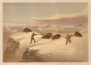 Moss: HMS Alert, Arctic c.1880. An original antique chromo-lithograph. 12 x 9 inches. [ARTp455]