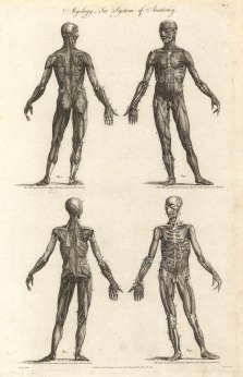 Cooke: Anatomy, 1789. An original copper-engraving. 9 x 14 inches. [NATHISp7283]