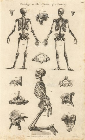 """Charles Cooke, 'Osteology - The System of Anatomy', 1789. An original copper-engraving. 9"""" x """"14."""