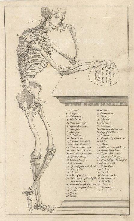 "Dr Motherby, '[Skeleton]', 1775. An original copper-engraving. 7"" x 12""."