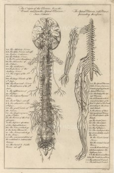 Dr Mortherby, The Nerves, 1775. An original copper-engraving. 7 x 12 inches. [NATHISp7290]