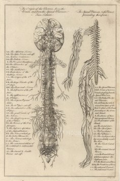 """Dr Motherby, 'The Origin of the Nerves [Nervous System'', 1775. An original copper-engraving. 7"""" x 12""""."""