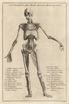 """Dr Motherby (2) 'A Fourth View of the Muscles', 1775 An original copper engraving. 7"""" x 12""""."""