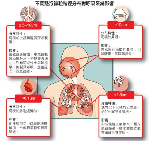 懸浮微粒沉積在呼吸道器官不同部位