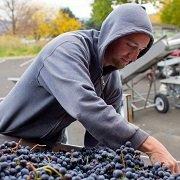 Lagana_winemaker
