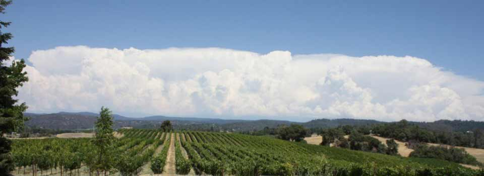 Gwinllan Estate Winery