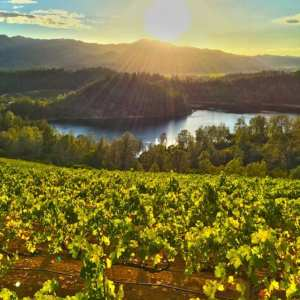 Burgess Cellars mountainside tasting library wines developing taste