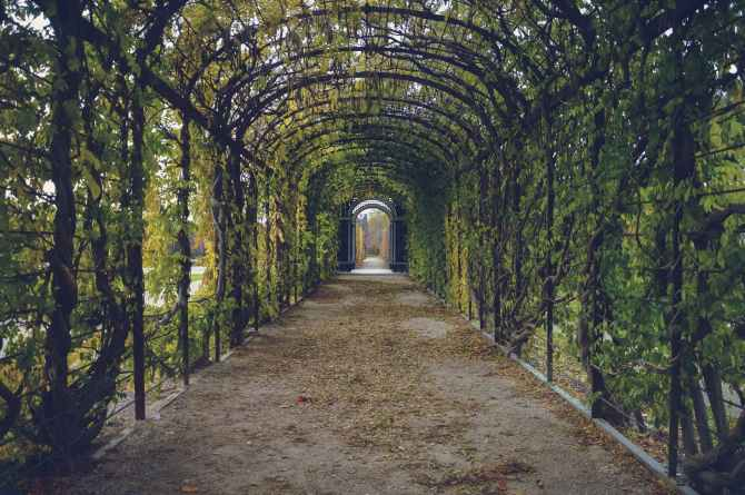 walking path way tunnel