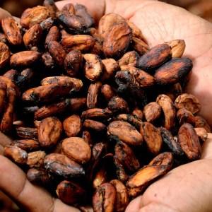 imagem de mãos segurando sementes de cacau seca