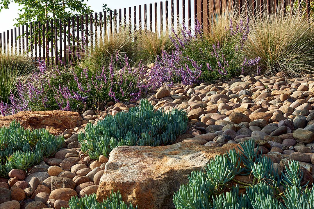 California gold cobble with Muhlenbergia rigen and Platanus racemosa planting. Photo: Millicent Harvey