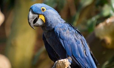 Vitro Architectural Glass to sponsor rainforest habitat restoration at National Aviary