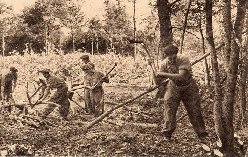 Chantiers de la Jeunesse Groupement n° 32 Groupe n° 3 Le travail en forêt