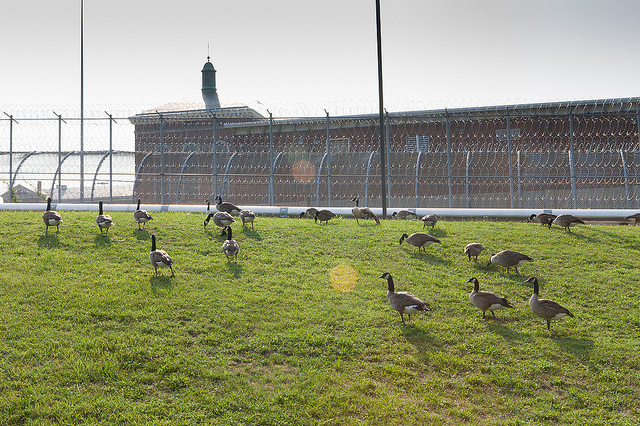 """""""Geese are Taking Over"""" by Fred Dunn (via Flickr)"""