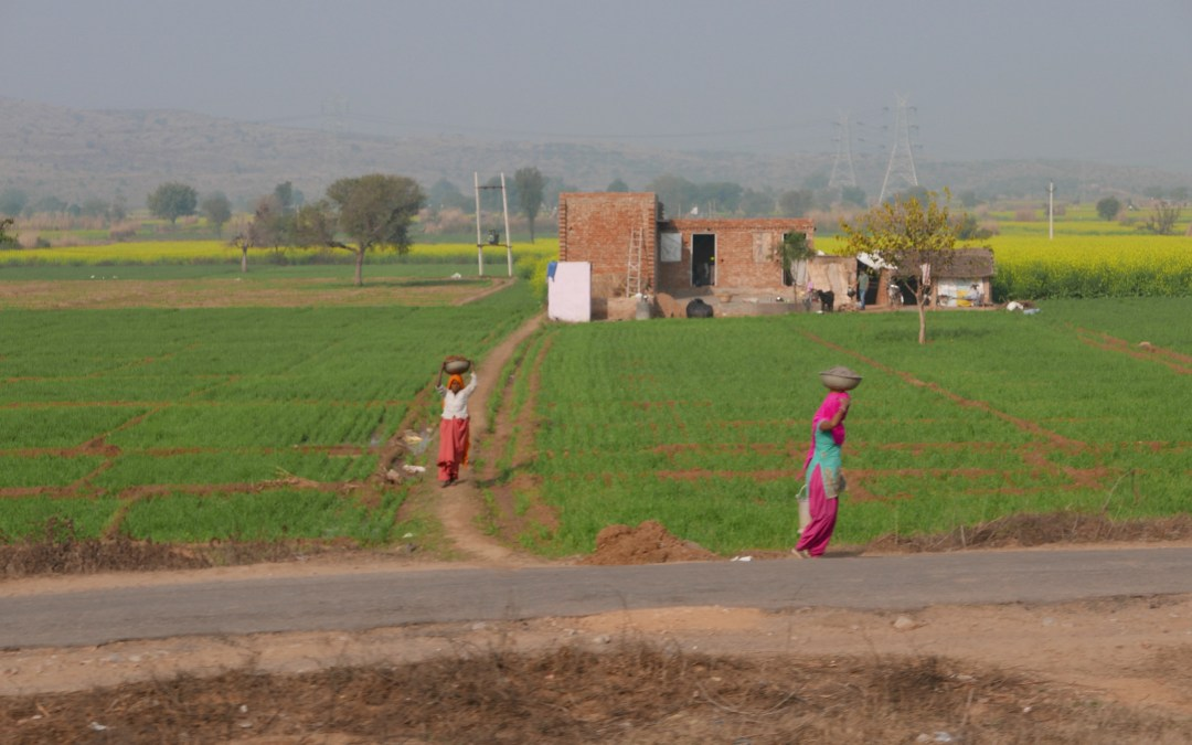 Pictures from India Trip January 2015