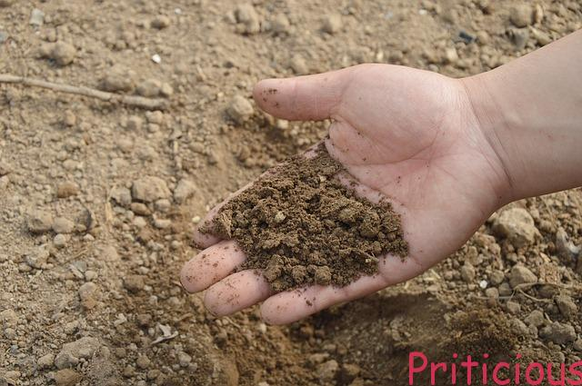 Understanding Garden Soil