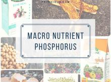 macronutrient phosphorus