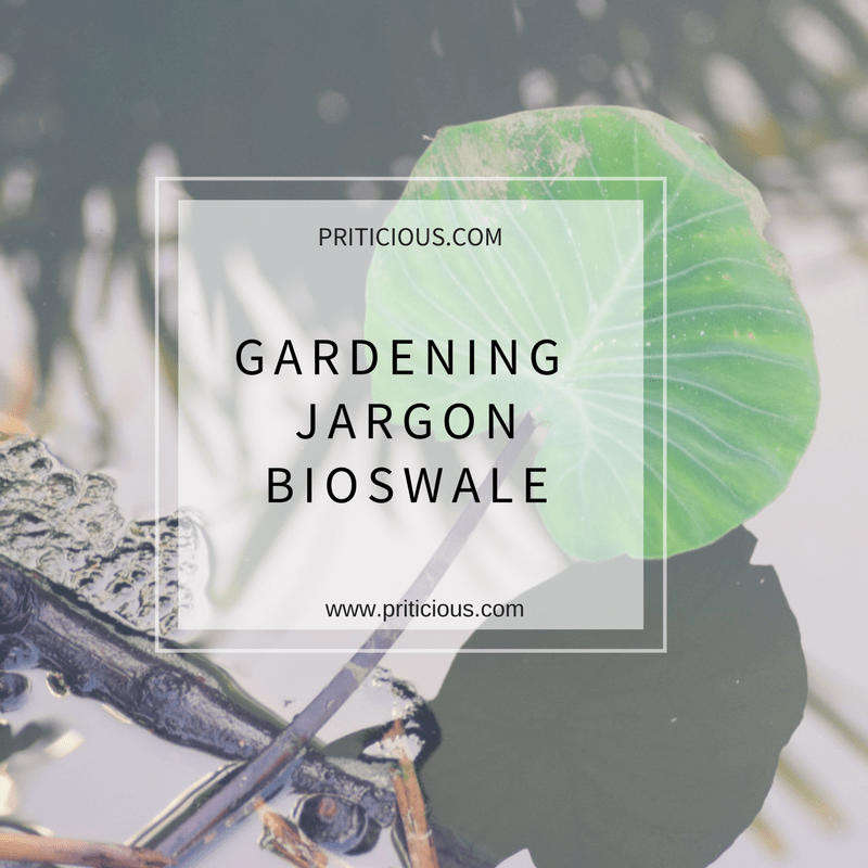 Gardening Jargon - Bioswale