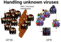 Number of biological viruses is finite