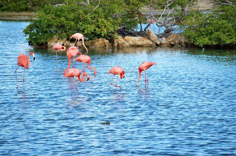 Curacao salt lakes flamingos