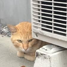 猫の張込み 画像