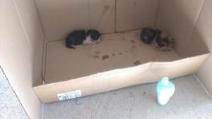 猫の赤ちゃん あと2匹
