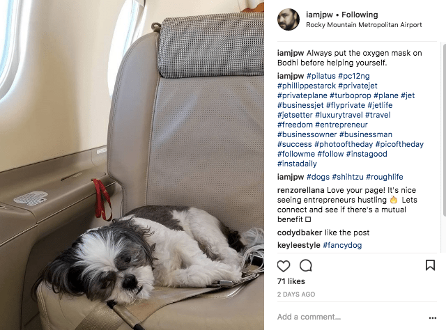 Shihtzu on a Pilatus PC-12
