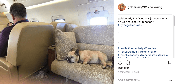 It's a dog's life for @goldenlady212 aboard this private jet