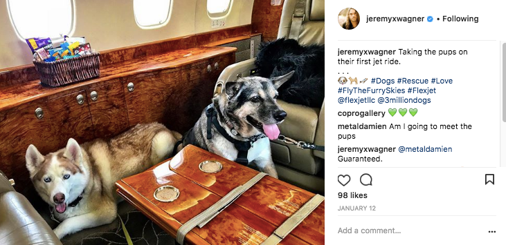 Two dogs fly on Flexjet