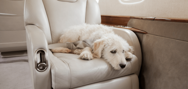 Privatefly pets on a private jet