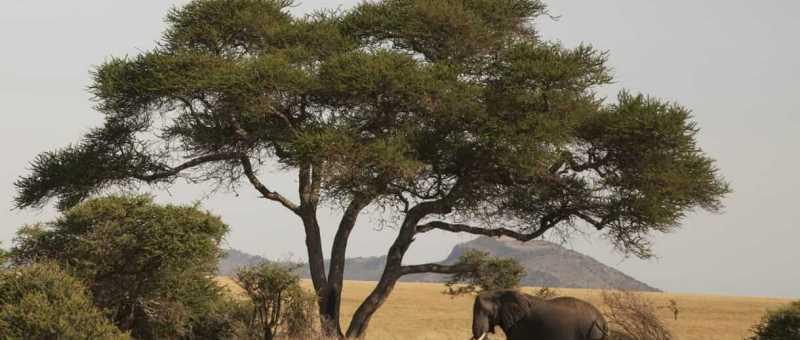 Four Seasons Africa