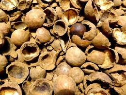 Macadamia nut floor