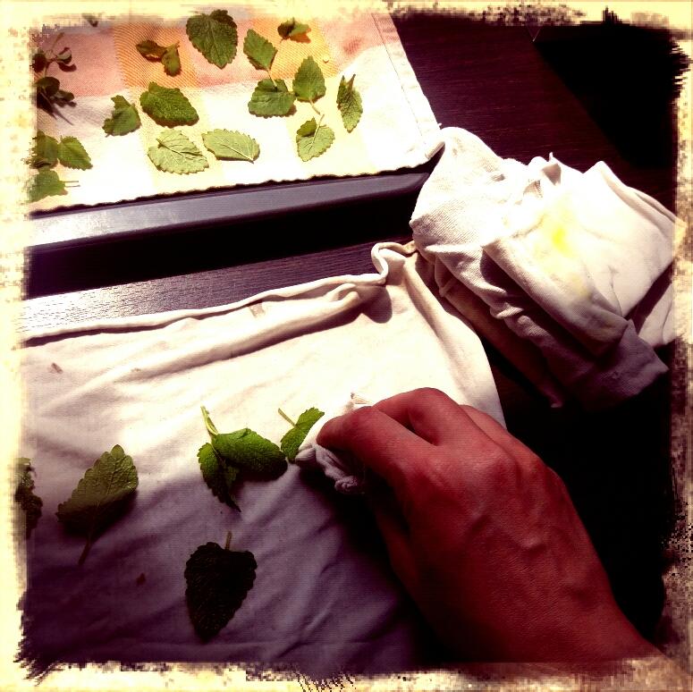 Vorbereitung zum Kräuter trocknen