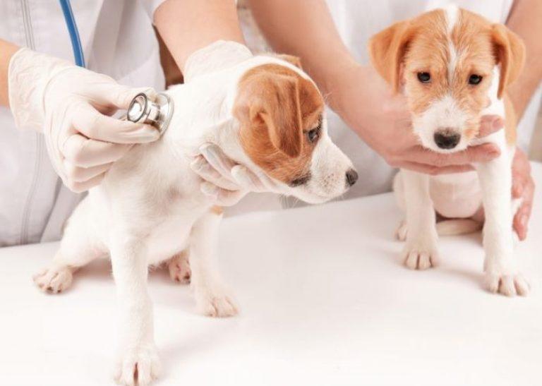 Важность проведения вакцинации животным 2