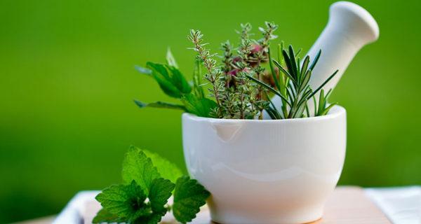 Nastavljen Pozitivan Trend Izvoza Ljekovitog Bilja, šumskih Plodova I Meda