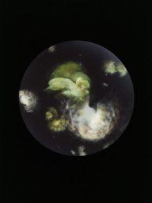 MANDY BARKER_Nebulae plaurosbrathic_H84 L59_01