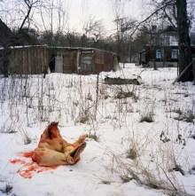 Hanna Zavarotnya's pig, butchered for the New Year holidays in Kapavati village. 79-year-old Hanna Zavarotnya survived WWII Nazi occupation and the...