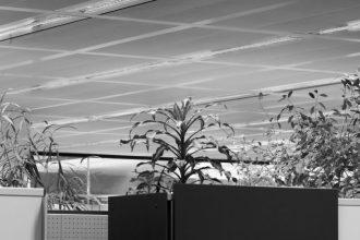 SASKIA GRONEBERG__Ascending plants amidst room dividers_H70 L50