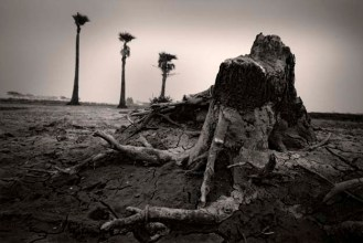 Increased salinity in water turned fertile lands into barren grounds. A ruin of an old tree trunk is left as evidence of past glory.