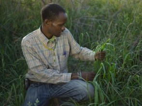 Joseph Lopsala Letoole, Holistic Management Coordinator, in newly restored grassland, West Gate Community Conservancy