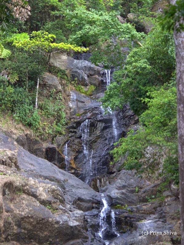 Road Trip Bangalore To Nagarhole