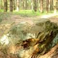 Góra Piekło i zbijowskie dęby