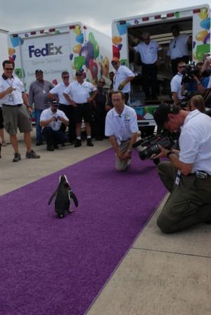 Fedex_flight_of_the_penguins