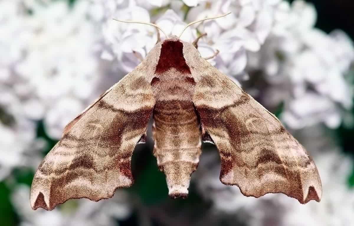 leptiri tijekom izlaska 23 godine izlazi 31 godinu
