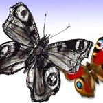 Как легко нарисовать Бабочку поэтапно
