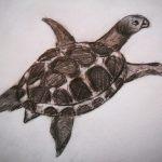 Как нарисовать черепаху карандашом поэтапно для детей