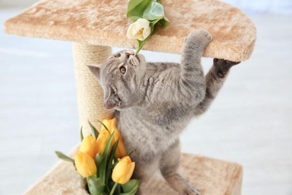 De leer van het kitten aan de clawholder