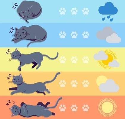 Prediksi cuaca kucing