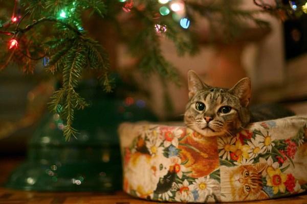 Kucing itu berbaring dengan tenang di dekat pohon Natal
