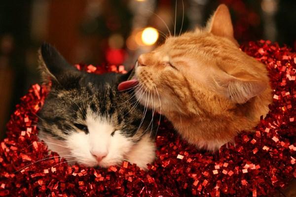 Dua kucing di perada